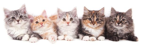 header-cats